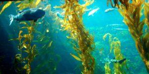 Sabias que el Fitoplancton genera el 90 % de oxígeno del planeta